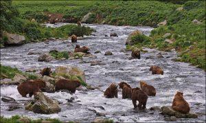 inside lots of bears