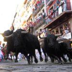 bulls226