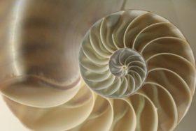 Fibonacci Investing Basics